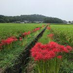 橿原市営香久山墓園で新規お墓が完成しました。最近人気の洋式墓です。